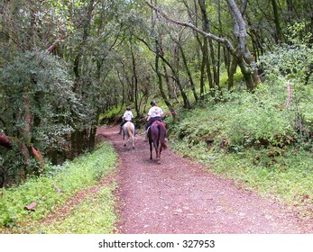 Horses and riders on forest trail