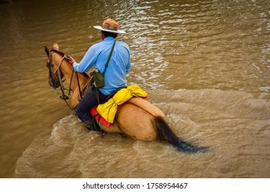 caballos que recorren las llanuras colombianas, acompañando al ganado y a los vaqueros en su trabajo diario.