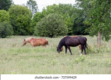 HORSES ROAM FREE IN THE COUNTRY.