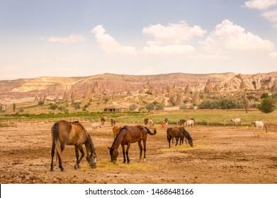 Horses roaming around in Kapadokya, near Goreme. Turkey