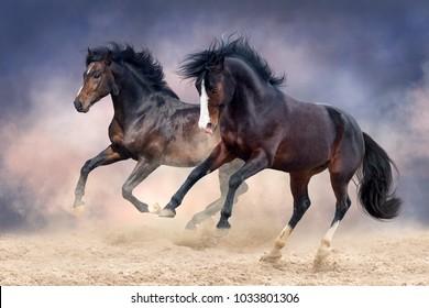 Horses run in desert fast
