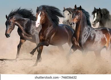 Horses run fast in sandy dast