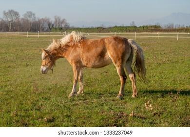 horses run free in the prairie
