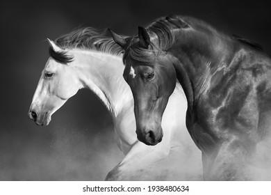 Horses run gallop in desert against sky