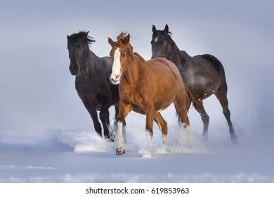 Horses run gallop in snow field against blue sky