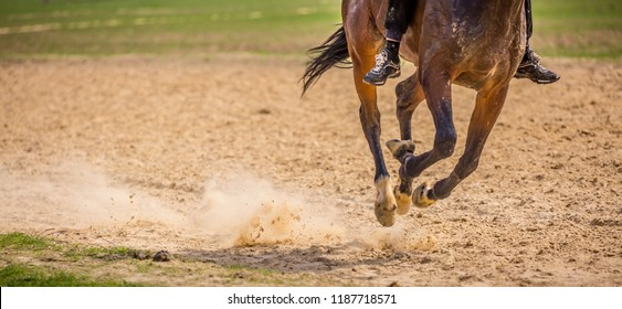 Horses run with a holo, jumps to victory leader, hoofs and feet run on the pitfall