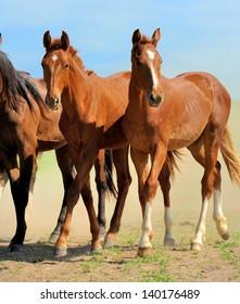 Horses run on field in summer
