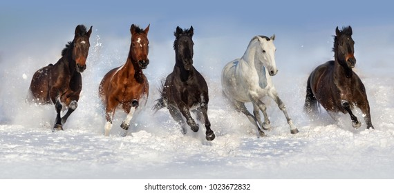 Horses run in winter snow field over blue sky