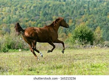 Horses running on the field