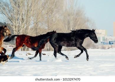 horses running in winter field