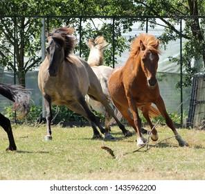horses are scared and run apart. horses herd startled and flees