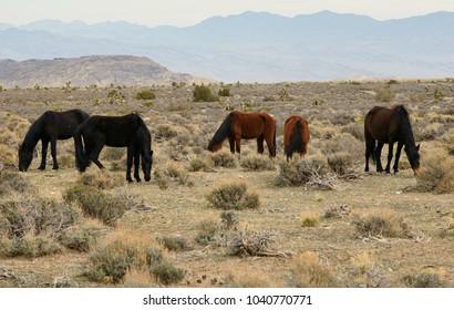 horses scenic wild grazing herd