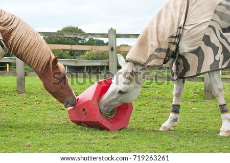 Horses Sharing A Red Pyramid. Hay Feeder Has A Rigid Outer Shell With Small  Holes