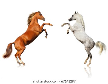 horses sighting