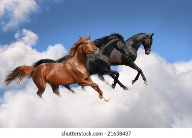 Horses in the sky