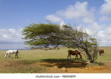 Horses at South Point graving around a wind blown tree.