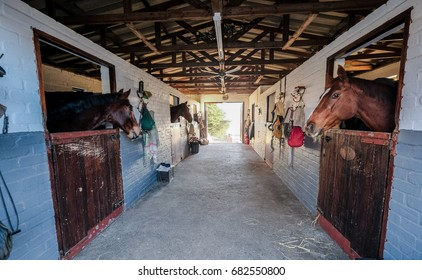 Horses in a stable waiting to be fed