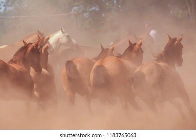 Horses stampeding in Argentina