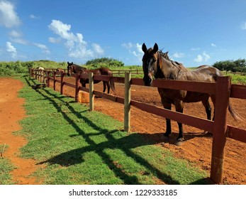 Horses stand behind a corral fence on a beautiful day
