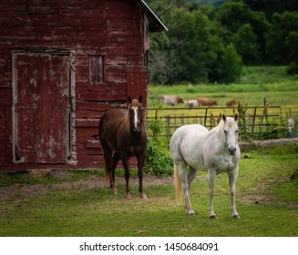 horses standing in front of old weathered red barn on green grass. quiet pastoral scene in the country.
