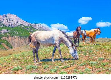 horses standing together on the meadow near mountain