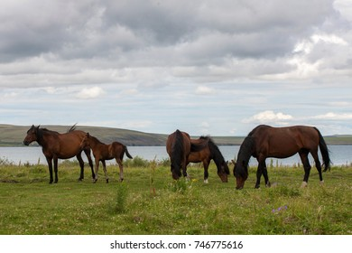 Horses steppe lake