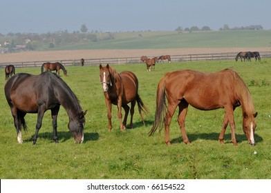horses, stud farm in Czech republic