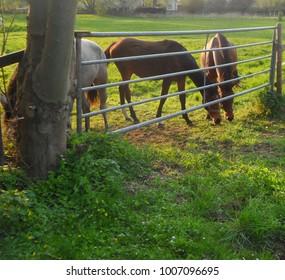 Horses in Summer