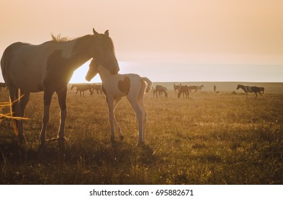 Horses at sunset in the field/ Warm artistic tinting