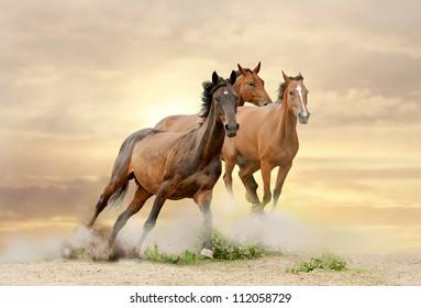 horses in sunset running in dust