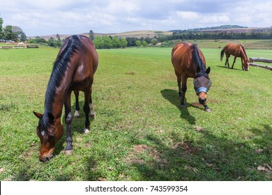 Horses Three Eating Landscape Horses three  equestrian animals closeup relaxing eating outdoors field landscape.