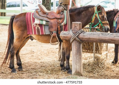Horses tied to a pole