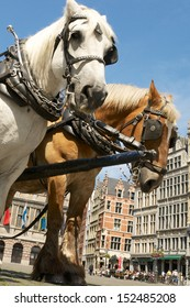 Horses at the town square in Antwerp