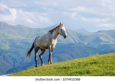 Horses in Tusheti national park, Georgia