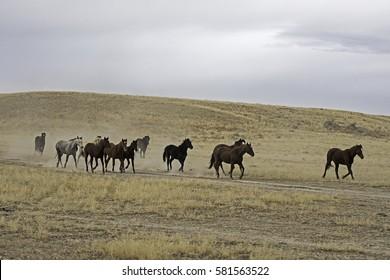 Horses in Utah Desert