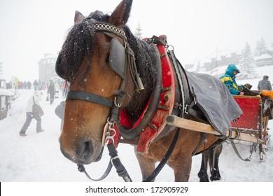Horses waiting  to transport people around the traffic free ski resort.