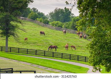 Horses wearing fly masks in summer at horse farm. Country landscape.