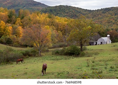 horses and white barn in autumn mountains