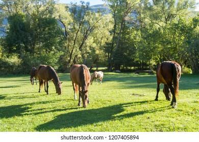 horses in the wild uncontaminated nature national park abruzzo italy national park abruzzo italy