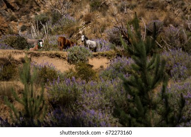 Horses in the wilderness