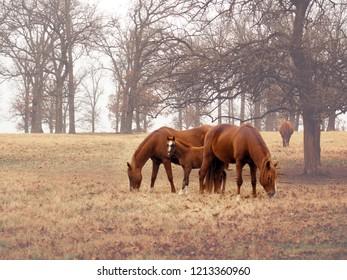 Horses in Winter Field
