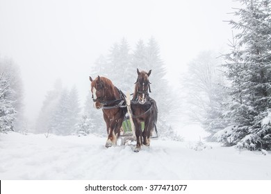 Horses in winter forrest