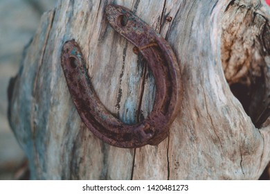 Horseshoe close-up on the stump of a tree.A rusty old metal horseshoe on a tree trunk.On a blurred background of light wood. Rotten stump.