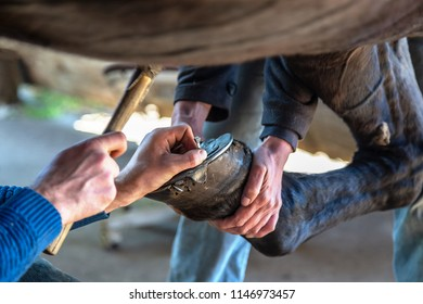 a horseshoe is fitted to the hoof of a horse