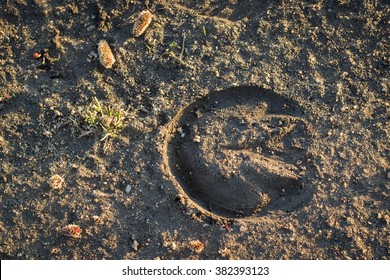 Horseshoe footprint