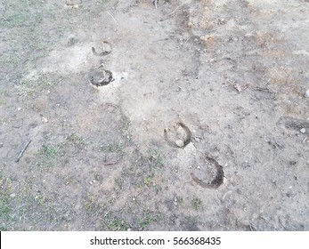 horseshoe prints in the mud