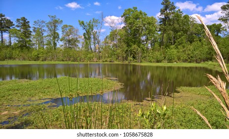 Horseshoe shape marsh