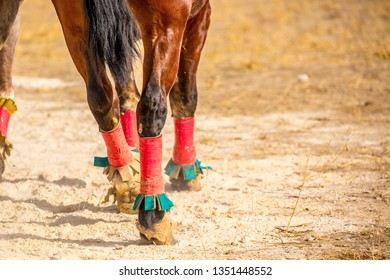 Horseshoes on the legs of horses. Horses run with a holo, jumps to victory leader, hoofs and feet run on the pitfall. hooves