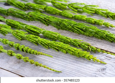 horsetail herbal plants on weathered old wooden table
