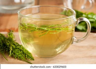 Horsetail tea made from fresh horsetail